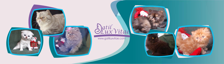 Gatil LuxVitae